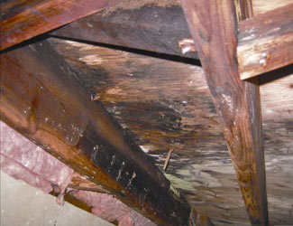 mold and rot in a Danbury crawl space