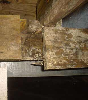 Extensive basement rot found in Paterson by Expediant Environmental Solutions, LLC