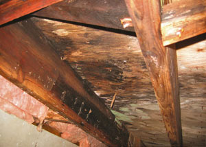 Extensive crawl space rot damage growing in Fair Lawn