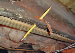 Destroyed crawl space structural wood in Teaneck