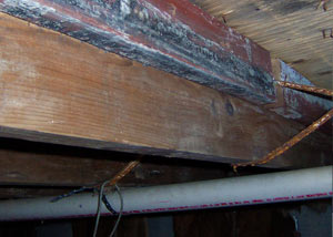 Rotting, decaying wood from mold damage in Fort Lee